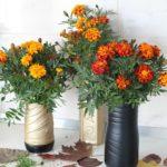 Ghivece de flori din pet uri 9